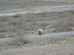 A Bear Behind