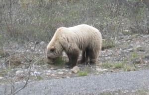 Fuzzy bear up close
